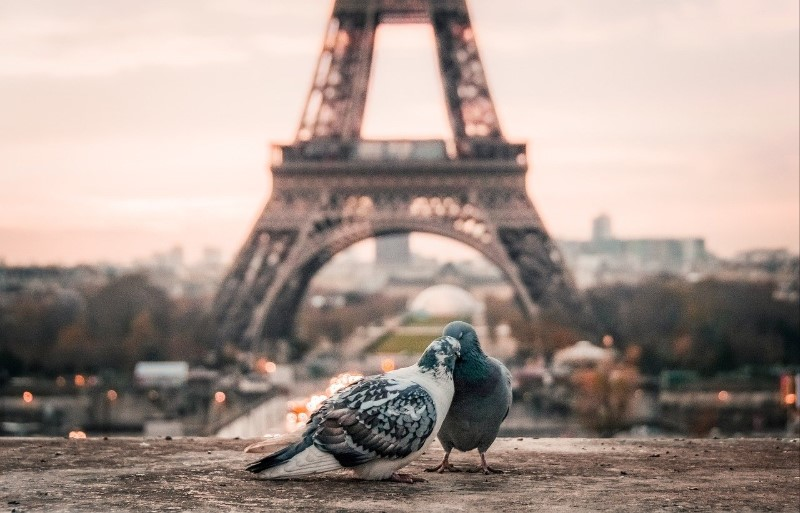 Paris, two pigeons in front of the Eiffel Tower