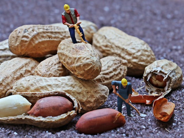 small men drilling monkey nuts