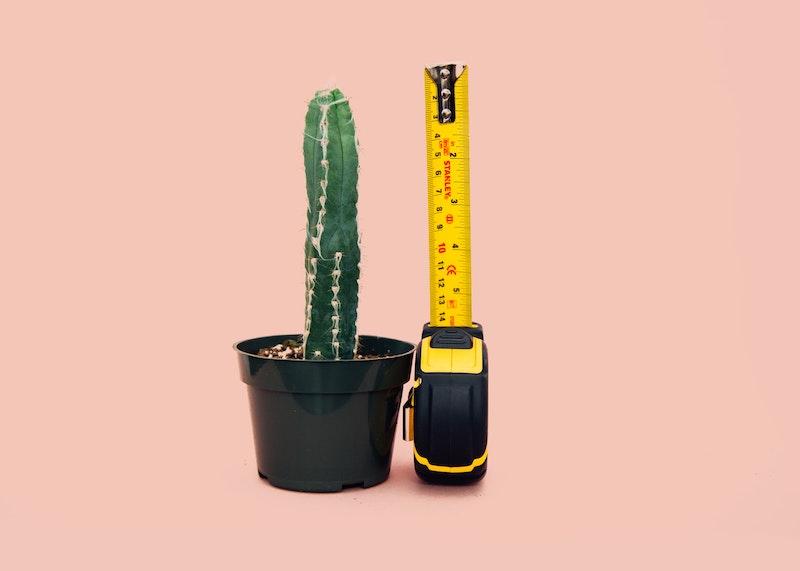 cactus next to tape measure